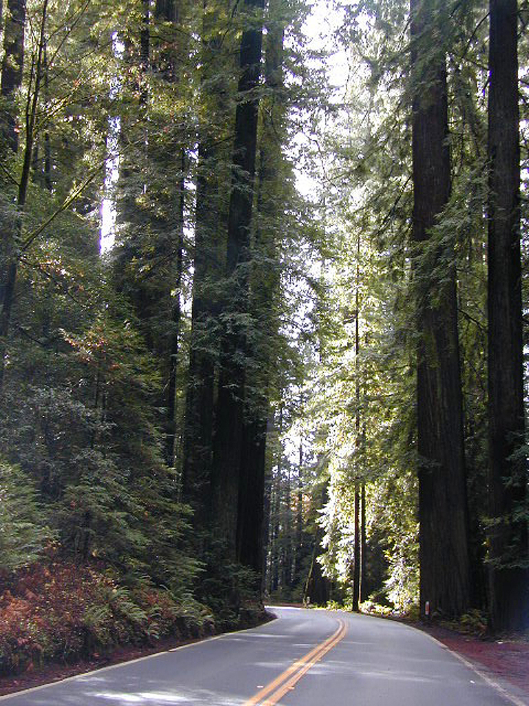 California Redwoods 101