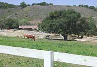 Rancho Osos Guest Ranch Horses