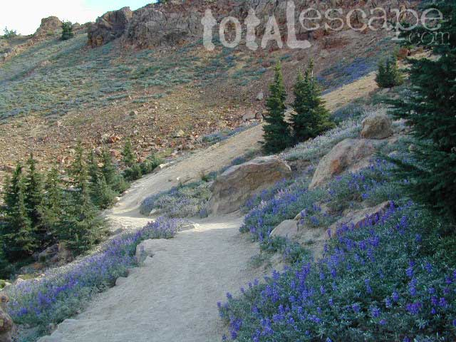 Lassen Peak Lupine Summer Hikes