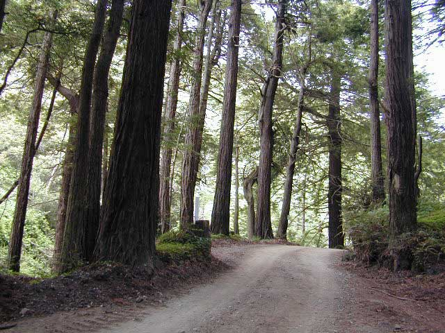 redwood drives