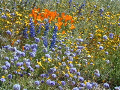 Wildflower Maps