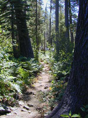 Sierra Hiking Path