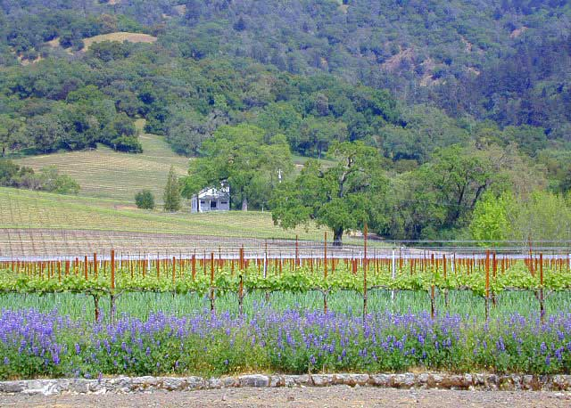 California St Helena Wine Country Camping Wineries Rv Trips
