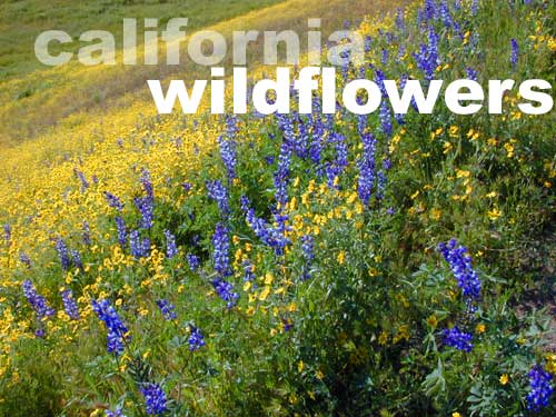 Wildflower Hikes