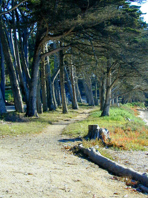 Morro bay state park campground pictures