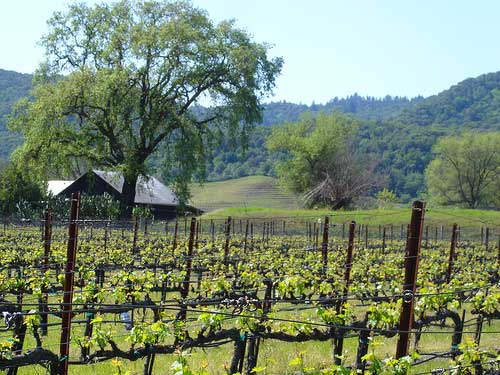 Sugarloaf Ridge Camping Wine Country Yountville CA