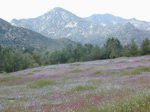 KernWildflowers