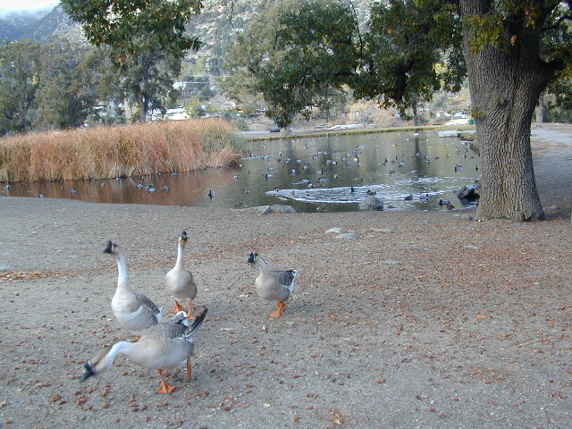 Frazier Pond