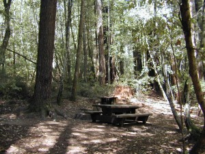 Big Basin Redwoods Camping