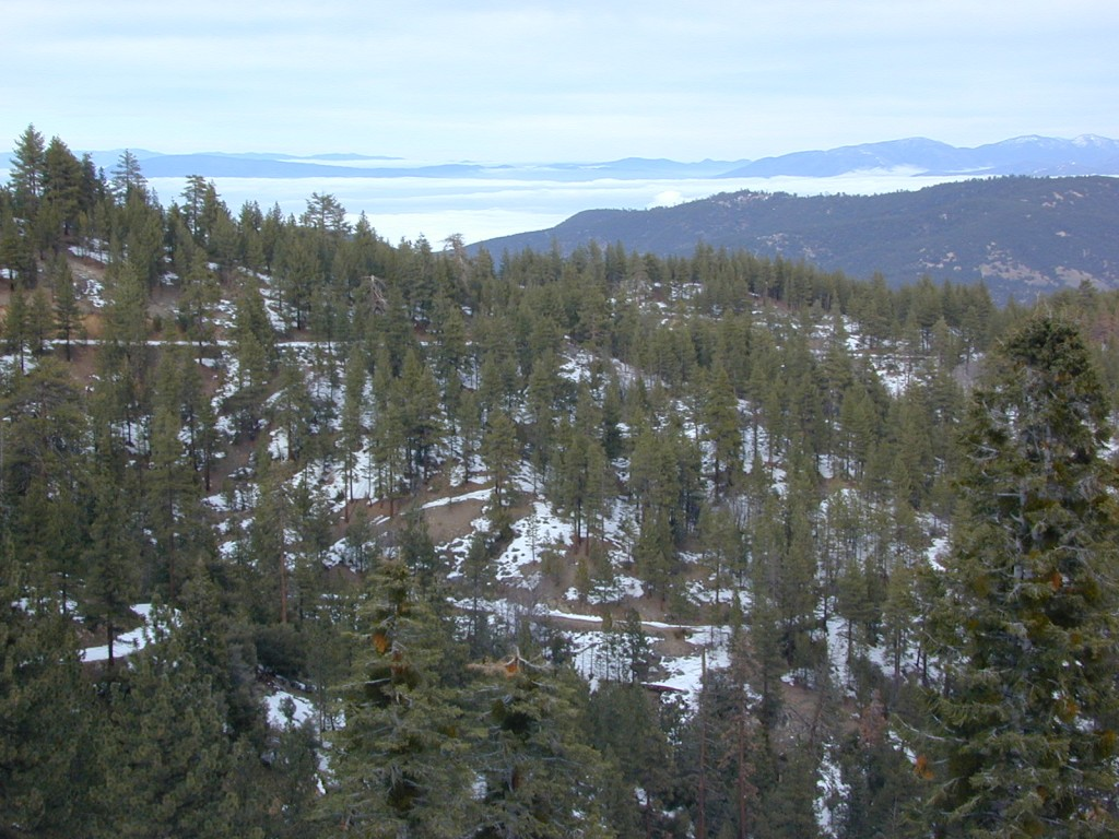 Mount Pinos Recreation Area