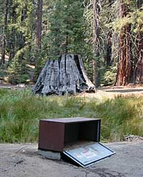 Bear Box in Mineral King Campground