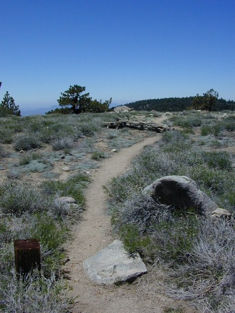 Trails on Pinos