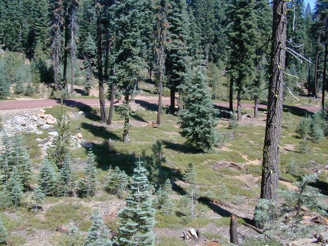 Lassen Forest
