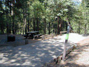 CoyFlat Sequoia