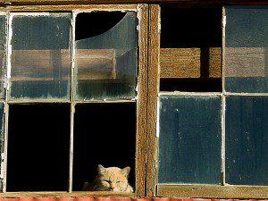 Post Office Cat