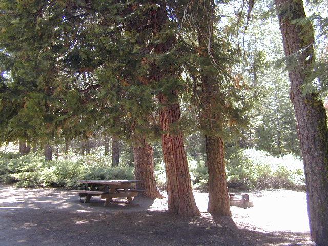 Sequoia campsite