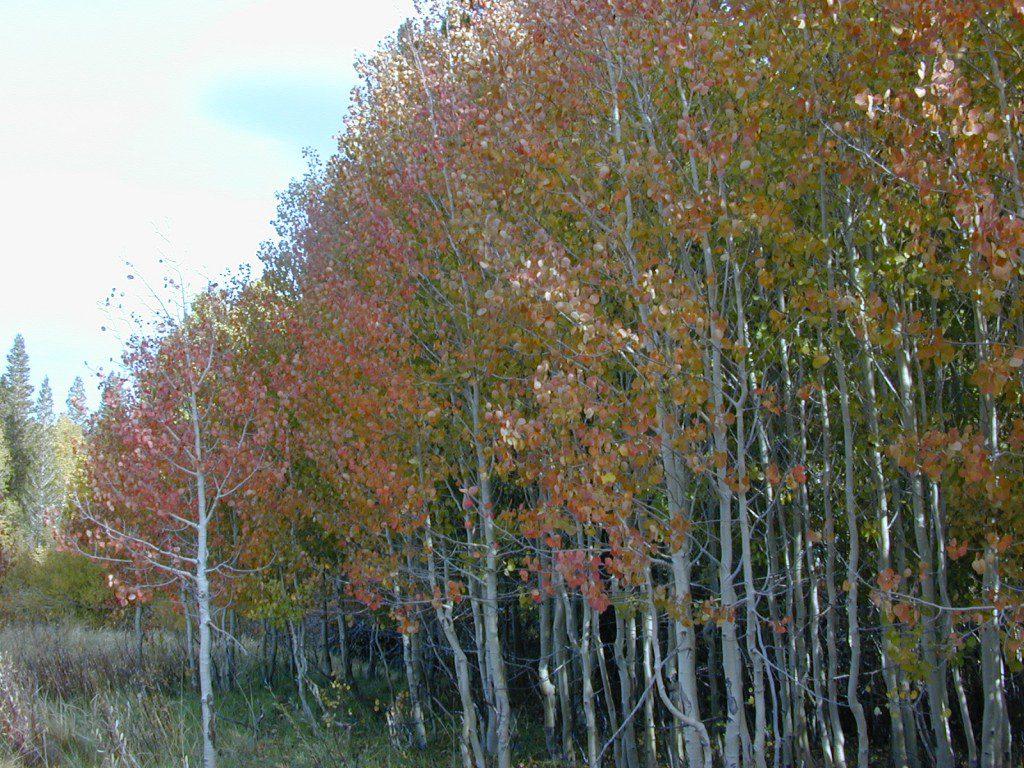 Autumn Eastern Sierras