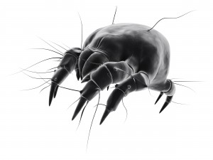 DustMites and Allergies