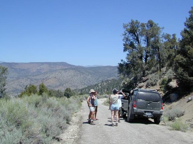 High Desert Sagebrush