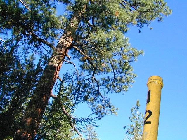 yellowpost