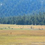 Big Meadow Kern
