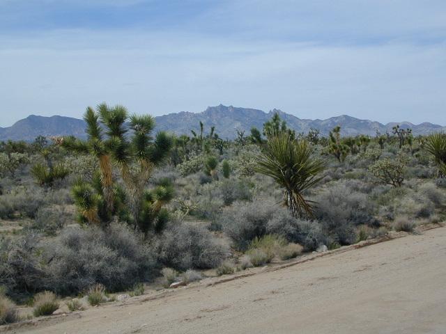 Mojave Road Trail