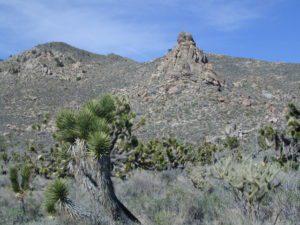 Mojave Peaks