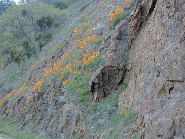 Sierra Canyon Wildflowers Total Escape Outside