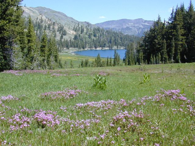 Highland Wildflowers