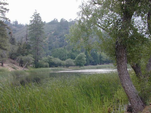 jackson lake view