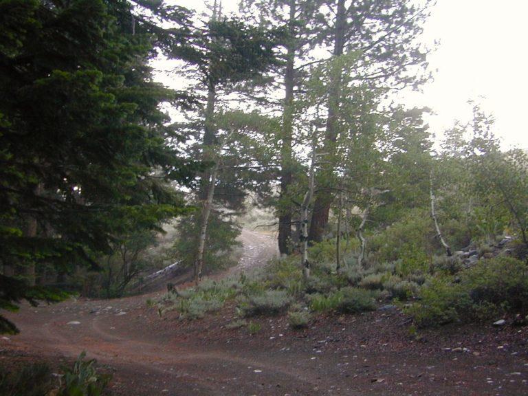 Aspen Groves of June Lake Loop