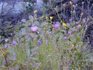 flora west sierra