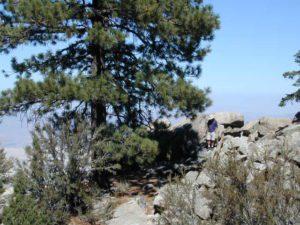 john bull camp spot
