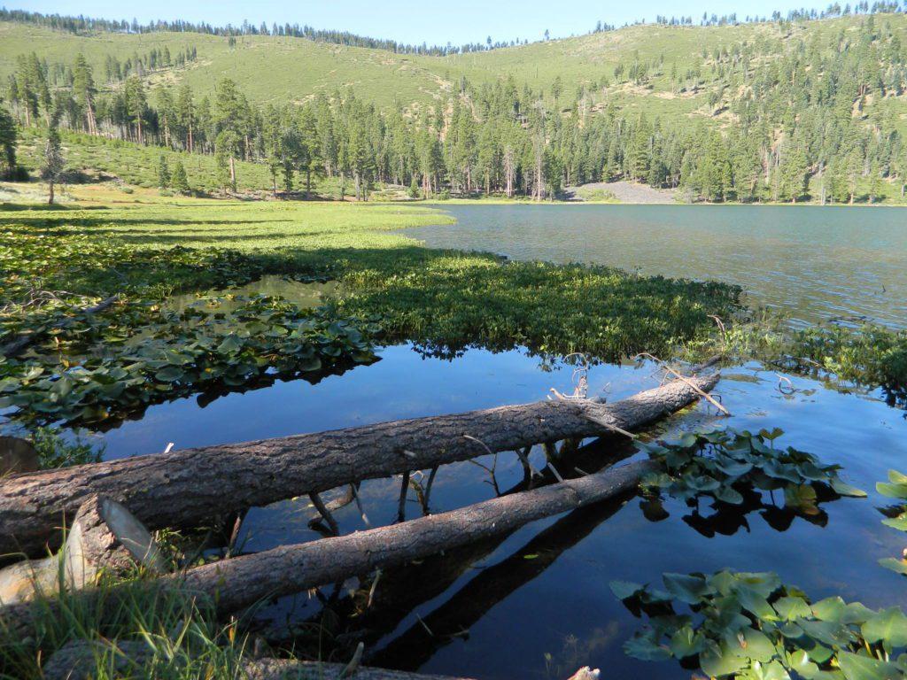 Wild Blue Lake