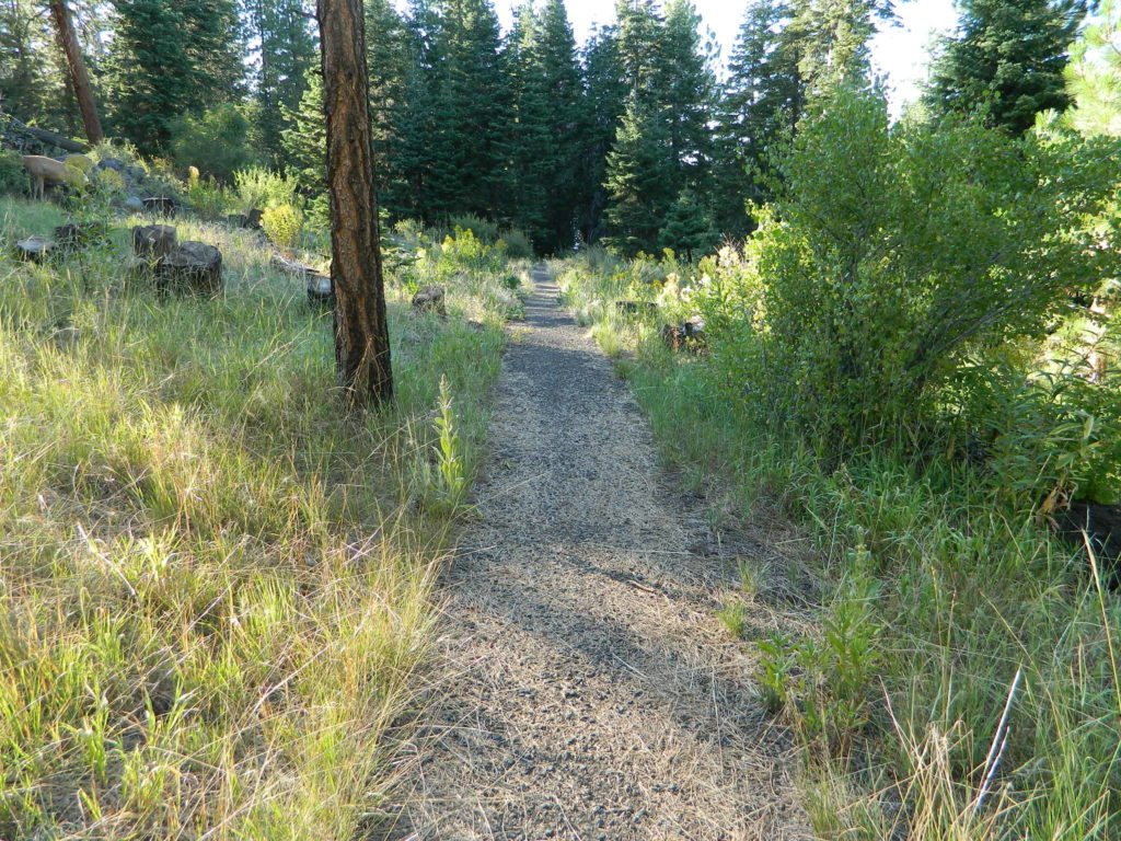 Trail around Campground