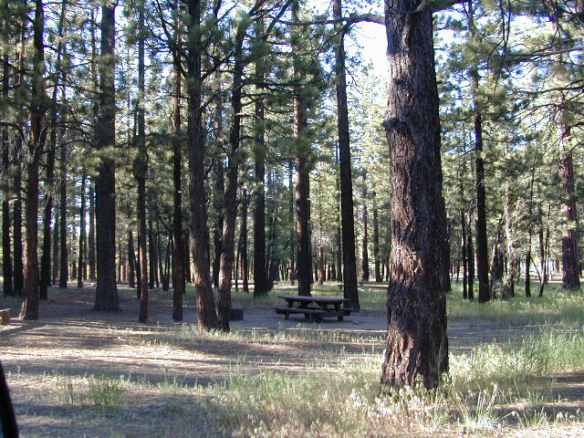 holcomb campsites